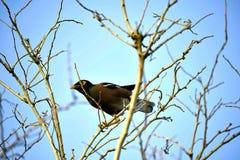 Oiseau dans l'Inde Photos libres de droits
