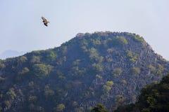 Oiseau dans la baie de Halong Photos stock