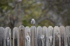 Oiseau dans la barrière Photo stock