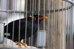 Oiseau dans la cage Photos libres de droits
