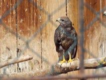 Oiseau dans la cage Images libres de droits