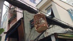 Oiseau dans la cage