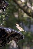 Oiseau dans la fontaine Images stock