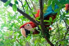 Oiseau dans la jungle tropicale Photo libre de droits