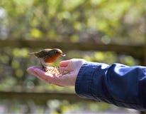 Oiseau dans la main Photo libre de droits