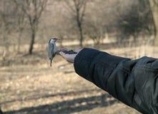 Oiseau dans la main Photographie stock libre de droits
