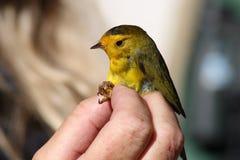 Oiseau dans la main une Photo stock