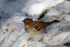 Oiseau dans la neige image stock