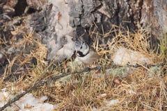 Oiseau dans la neige photographie stock