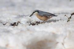 Oiseau dans la neige images stock
