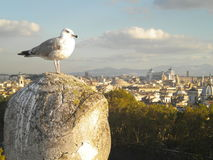 Oiseau dans la ville Photos stock