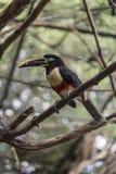 Oiseau dans la volière de Carthagène de parc photo stock