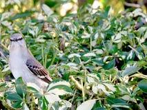 Oiseau dans le buisson Image libre de droits