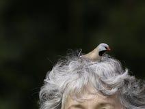Oiseau dans le cheveu Images stock