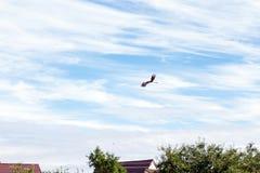Oiseau dans le ciel Photo stock