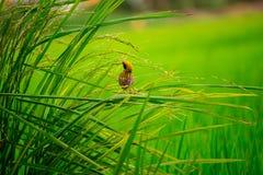 Oiseau dans le jardin Image libre de droits