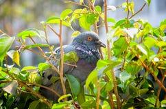 Oiseau dans le jardin Photos libres de droits