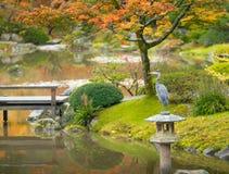Oiseau dans le jardin japonais en automne, Seattle Photographie stock libre de droits