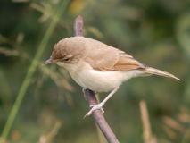 Oiseau dans le sauvage Photo stock