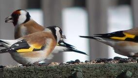 Oiseau dans le sauvage banque de vidéos