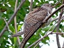Oiseau dans le sauvage Photos libres de droits