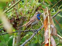 Oiseau dans le sauvage Photographie stock libre de droits