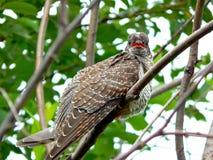 Oiseau dans le sauvage Photos stock