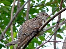 Oiseau dans le sauvage Image libre de droits