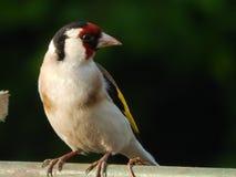 Oiseau dans le sauvage Photographie stock