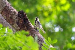Oiseau dans les branches Photographie stock