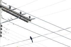 Oiseau dans les lignes électriques image stock