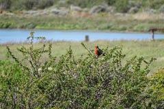 Oiseau dans un buisson avec le lac au fond Images stock