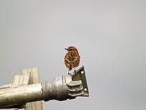 Oiseau dans un tuyau d'irrigation image stock
