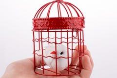 Oiseau dans une cage à oiseaux Image stock