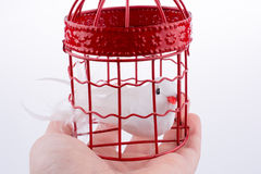 Oiseau dans une cage à oiseaux Photo libre de droits