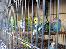 Oiseau dans une cage Photographie stock