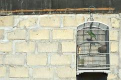 Oiseau dans une cage Photo stock
