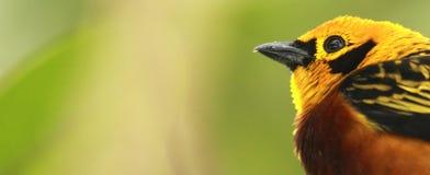 Oiseau dans une forêt Photos libres de droits