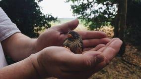 Oiseau de bébé photos stock