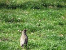 Oiseau de bébé Photographie stock
