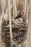 Oiseau de bébé Image libre de droits