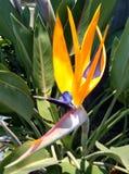 Oiseau de beauté de paradis Photographie stock