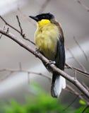 Oiseau de Beutifiul Photos libres de droits