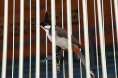 Oiseau de bonne chance dans une cage en Thaïlande Photographie stock libre de droits