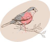 Oiseau de bouvreuil sur une branche illustration libre de droits
