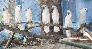 Oiseau de cacatoès Images stock