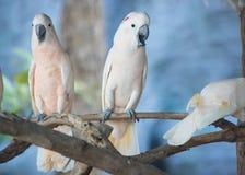 Oiseau de cacatoès Images libres de droits
