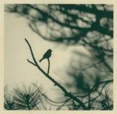 Oiseau de calligraphie illustration de vecteur