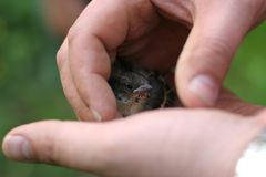Oiseau de chéri Photographie stock libre de droits