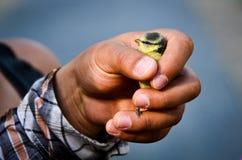 Oiseau de chéri de fixation de main Photo libre de droits